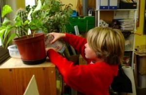 Services : l'arrosage des plantes